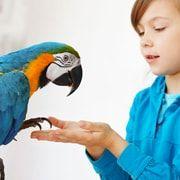 Уход за птицами