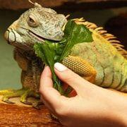 Уход за рептилиями