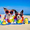 Передержка собак(маленьких пород), кошек, грызунов