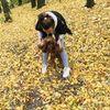 Беру собачек на передержку, НЕ АГРЕССИВНЫХ!:)