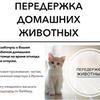 Передержка домашних животных в Ирпене