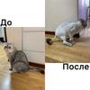 Стрижка котов Киев